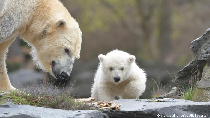 Tonja and her cub (picture-alliance/dpa/B. Pedersen)