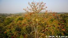 Bangladesch Satchori National Park