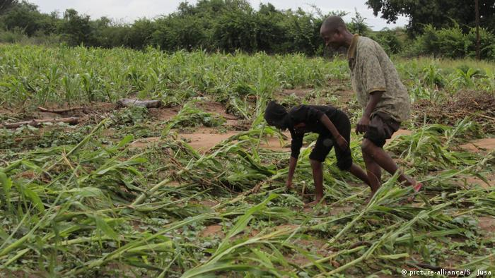 Farmers check their crops in Zimbabwe after the area was hit by Cyclone Idai