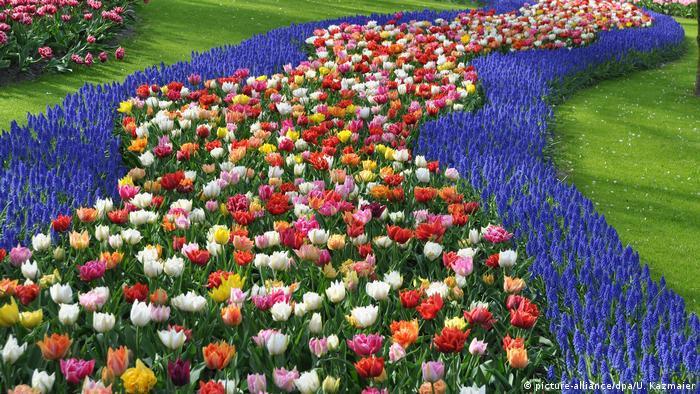 Tulips (picture-alliance/dpa/U. Kazmaier)