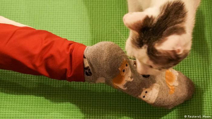 Frauen nehmen an einem Katzenyogakurs teil (Reuters/J. Moon)