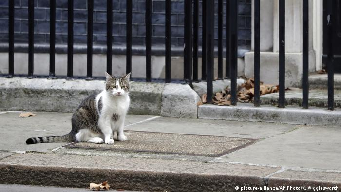 Großbritannien London - Larry, die 10 Downing Street Katze (picture-alliance/AP Photo/K. Wigglesworth)
