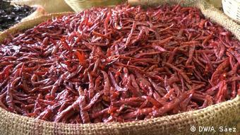 DW Con sabor y saber Chilli-Schoten in Mexiko City