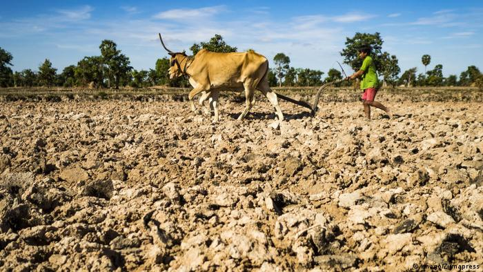 Drought in Cambodia caused by climate change
