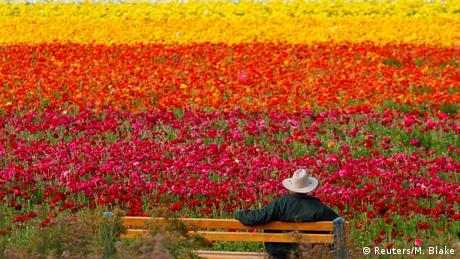 BdTD USA Blumenfelder in Kalifornien (Reuters/M. Blake)