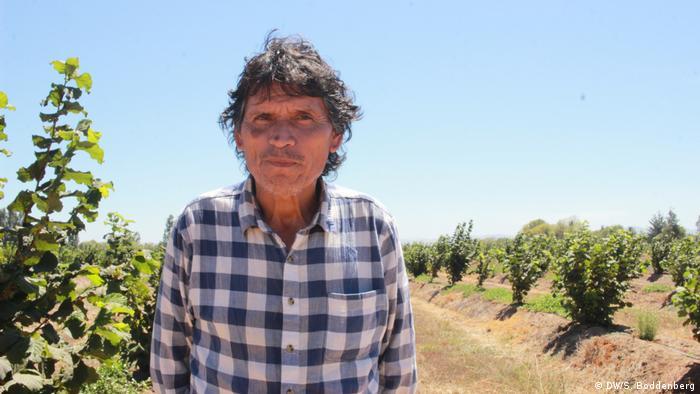 Chile: plantación de avellanos en Pelarco, Región del Maule - Lázaro Aburto (DW/S. Boddenberg)