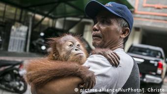 Indonesien Denpasar Orang-Utan (picture-alliance/NurPhoto/J. Christo)