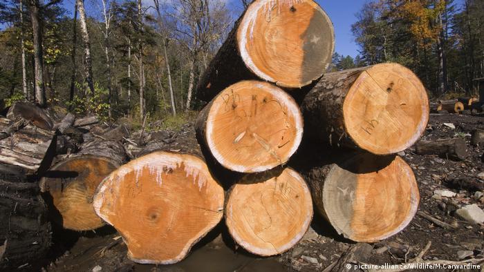 Russland illegaler Holzeinschlag