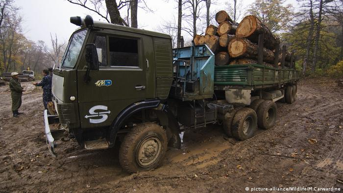 Russian logging