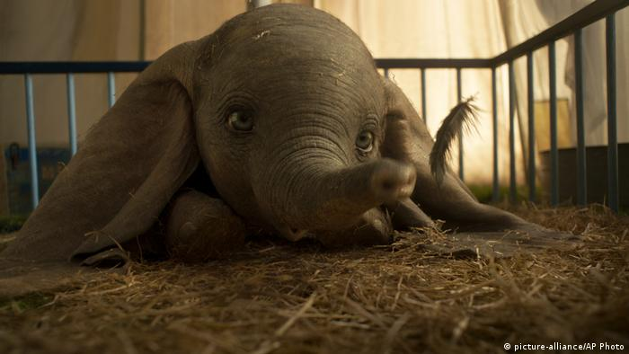 Elefant Dumbo liegt im Stroh (picture-alliance/AP Photo)
