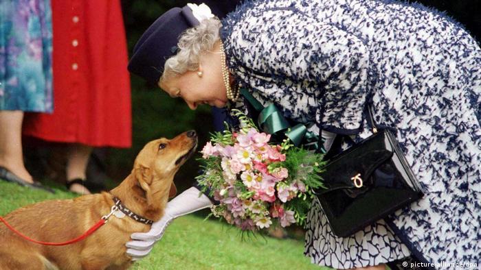 Die Briten gelten als große Hundeliebhaber- Queen mit Corgi-Hund