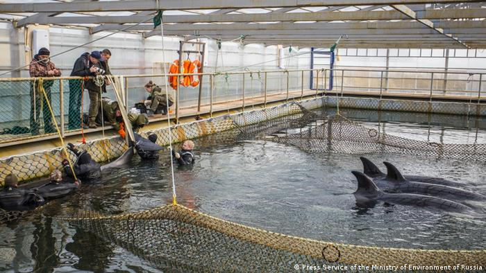Team of experts evaluate the whales' health state (Press Service of the Ministry of Environment of Russia)