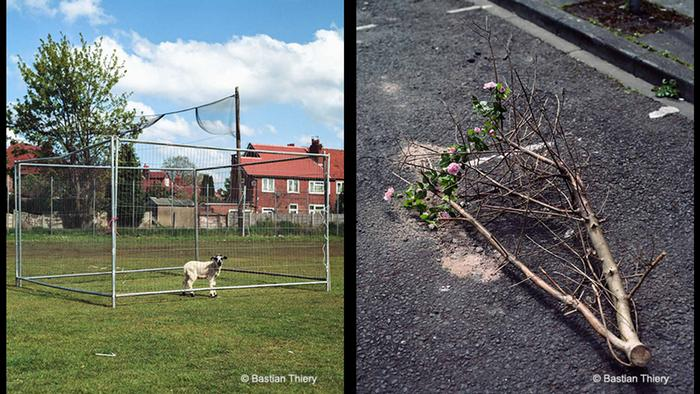 Dog on a playing field, cut off branch (Copyright: Bastian Thiery)