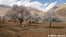 28-03.2019 Afghanistans - Frühlingsfest: Natur und die Leute in Kohmard District, Bamiyan Provinz