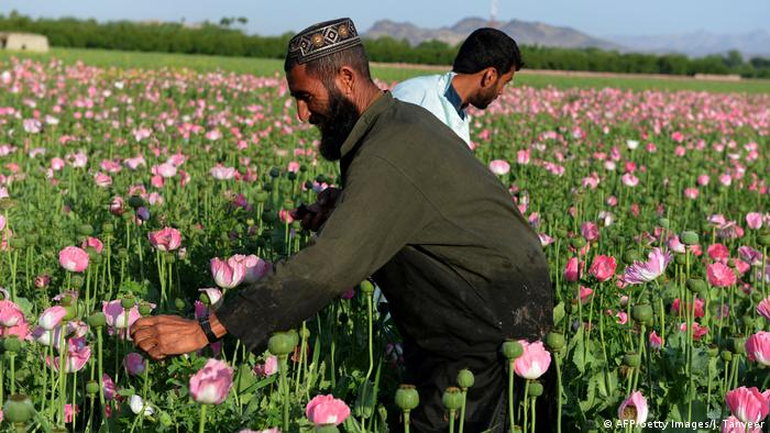 Two men in a poppy field in Afghanistan