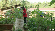 DW Eco Africa - Urban farming in Ugandan school