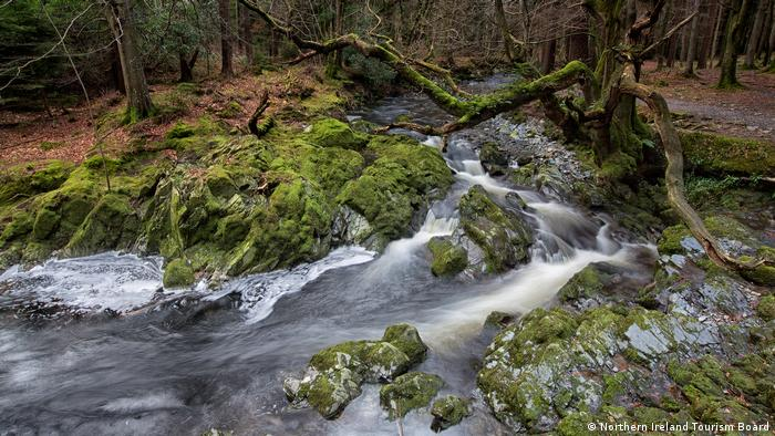 Tollymore Forest (Northern Ireland Tourism Board)