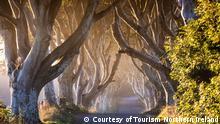 Game of Thrones-Drehorte in Nordirland The Dark Hedges_The Kingsroad