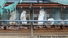 1.4.2019, Rahden, NRW, Deutschland, Käfige auf der Pelzfarm in der Stadt Rahden, NRW