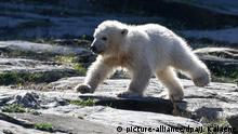 01.04.2019, Berlin: Die kleine Eisbärin Hertha rennt im Tierpark Berlin durch das Gehege. Das Eisbär-Mädchen ist am 1. Dezember 2018 zur Welt gekommen. Foto: Jens Kalaene/dpa-Zentralbild/dpa   Verwendung weltweit