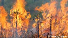 Urheber: Katja Döhne / DW Ort: Belize, März 2019. In Belize, Mittelamerika, arbeitet die Ya'axché Nichtregierungsorganisation mit dutzenden Bauern daran, neue, nachhaltigere Landwirtschaftstechniken zu implementieren. Feuer nah.