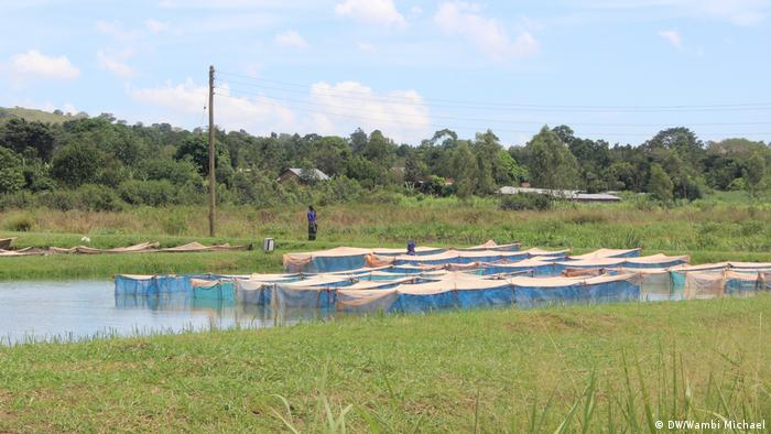 SON Fish Farm in Bugungu (DW/Wambi Michael)