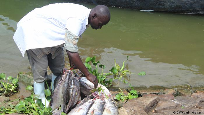 A man prepares fish for transport to market (DW/Wambi Michael)