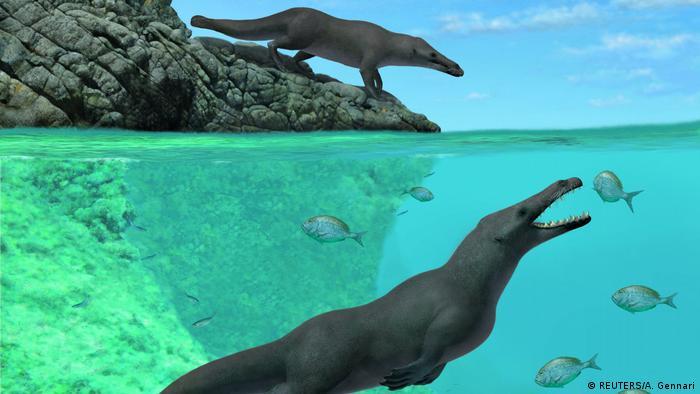 Neuentdeckter 4-beiniger Wal, Südpazifik (REUTERS/A. Gennari)