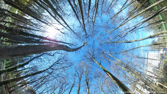 Looking up at the trees and sky through a fisheye lens in a national park in Rostock, Germany (Picture Alliance, 360-Berlin, J Knappe)