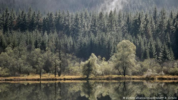 A calm forest landscape with the trees reflecting on a lake and mist coming off the trees (Picture Alliance, Image Broker, F B Schulz)