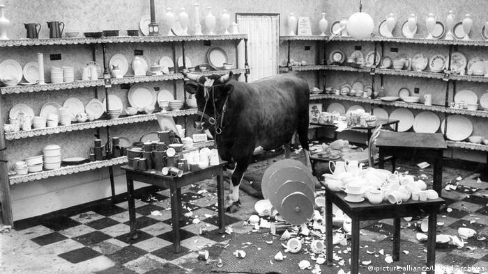 A bull stampeding through a Chinese porcelain shop (Picture Alliance, United Archives)