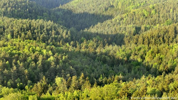 A view over the green treetops of a mixed forest in spring in Saxon Switzerland National Park, Saxony Germany (Picture Alliance, R Bala)