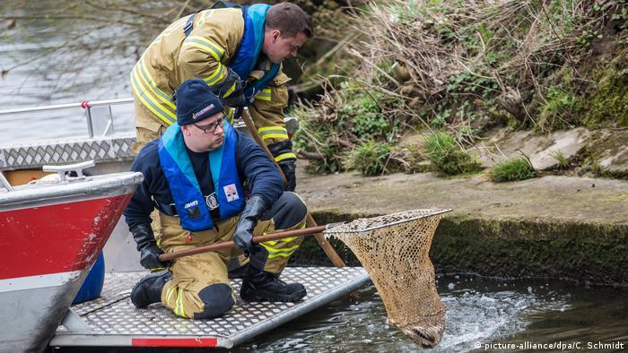 Heilbronn firefighters netting dead fish from the Schozach River