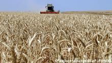 Deutschland Getreideernte