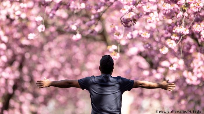 A man stands with his arms spread apart enjoying the bright pink cherry blossoms Bonn has to offer.