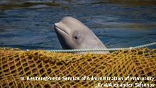 Russland Region Primorje Wale in Gefangenschaft