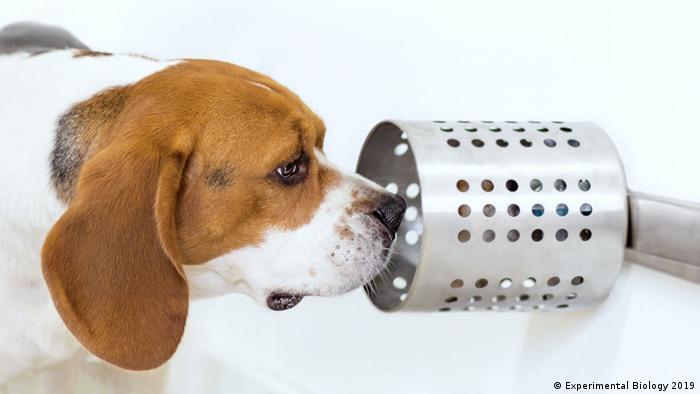 Hund kann Krebs erschnüffeln