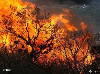 Аномальная жара в России привела к лесным пожарам