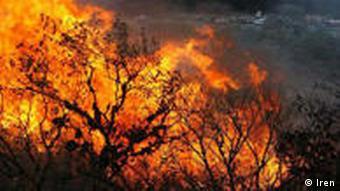 در سی سال گذشته جنگلهای ایران از ۱۸ میلیون هکتار به ۱۲ میلیون هکتار کاهش یافتهاند