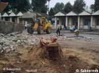 تخریب درختان امامزاده عبدالله آمل
