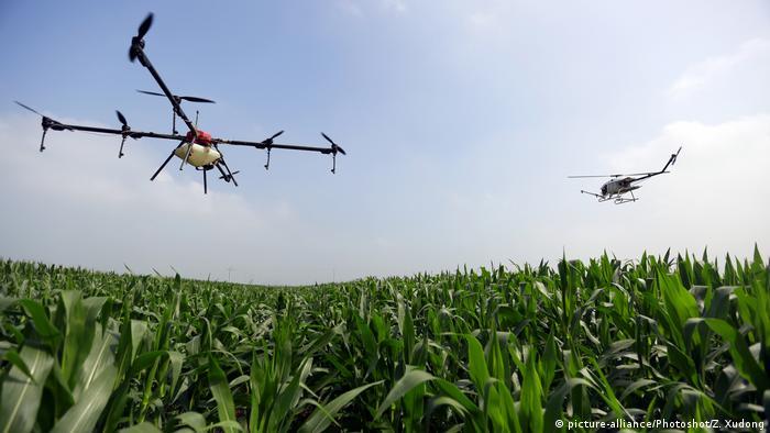 Drones lançam pesticidas sobre plantação de milho na China