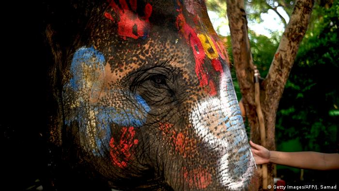 Elephant being painted