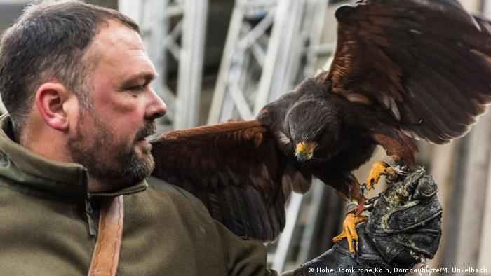 Falcon expert Marco Wahl with his African Harris's hawk