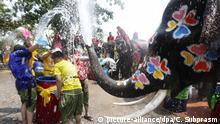 BdTD Songkran Thailand Elefanten Water Festival Neues Jahr