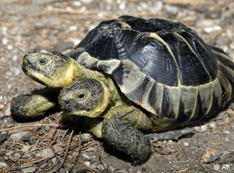 Turtle with two heads