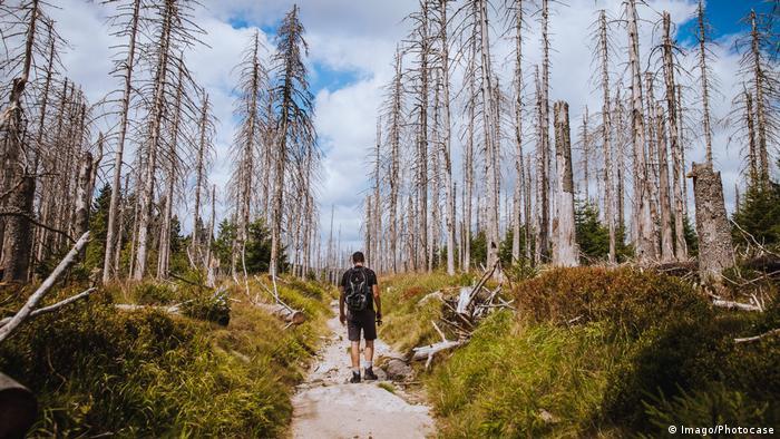 Мужчина идет по выжженному лесу