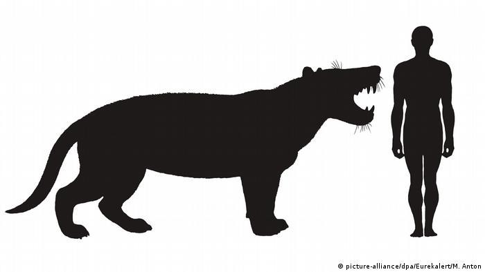 Порівняння розмірів древнього лева з сучасною людиною