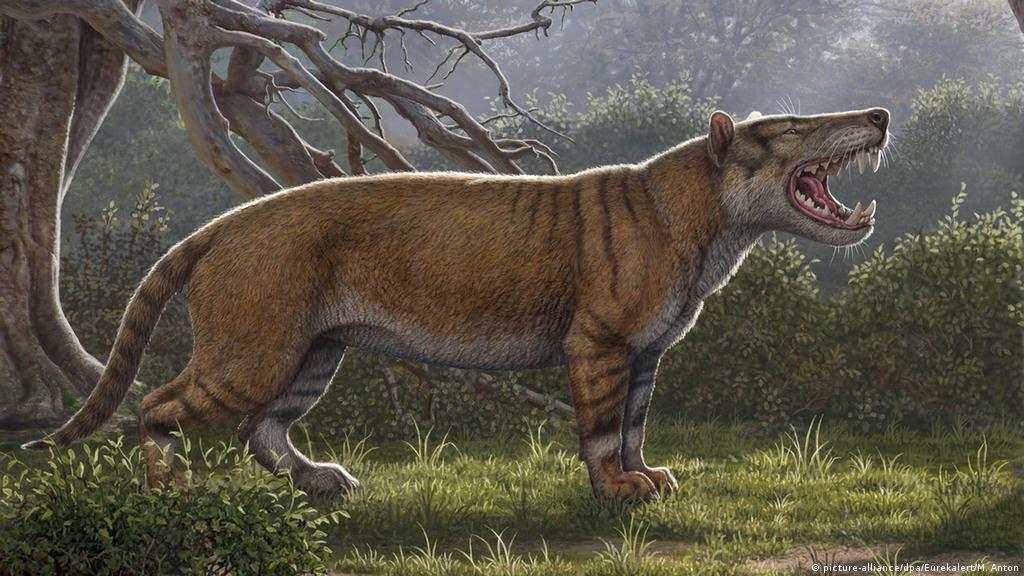 اكتشاف أكبر حيوان ثديي مفترس عاش على سطح الأرض منوعات نافذة Dw عربية على حياة المشاهير والأحداث الطريفة Dw 18 04 2019