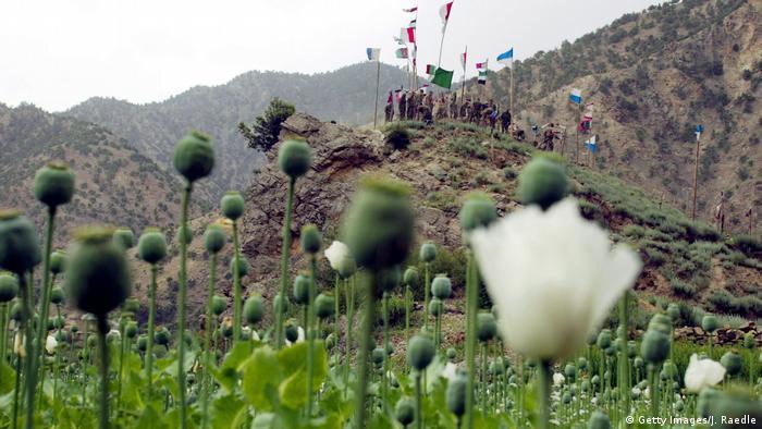 Afghanistan - Opiumfelder (Getty Images/J. Raedle)
