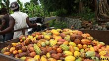 Cacao cultivation in São Tomé and Príncipe, 20/04/2019 Cacao fruit being transported
